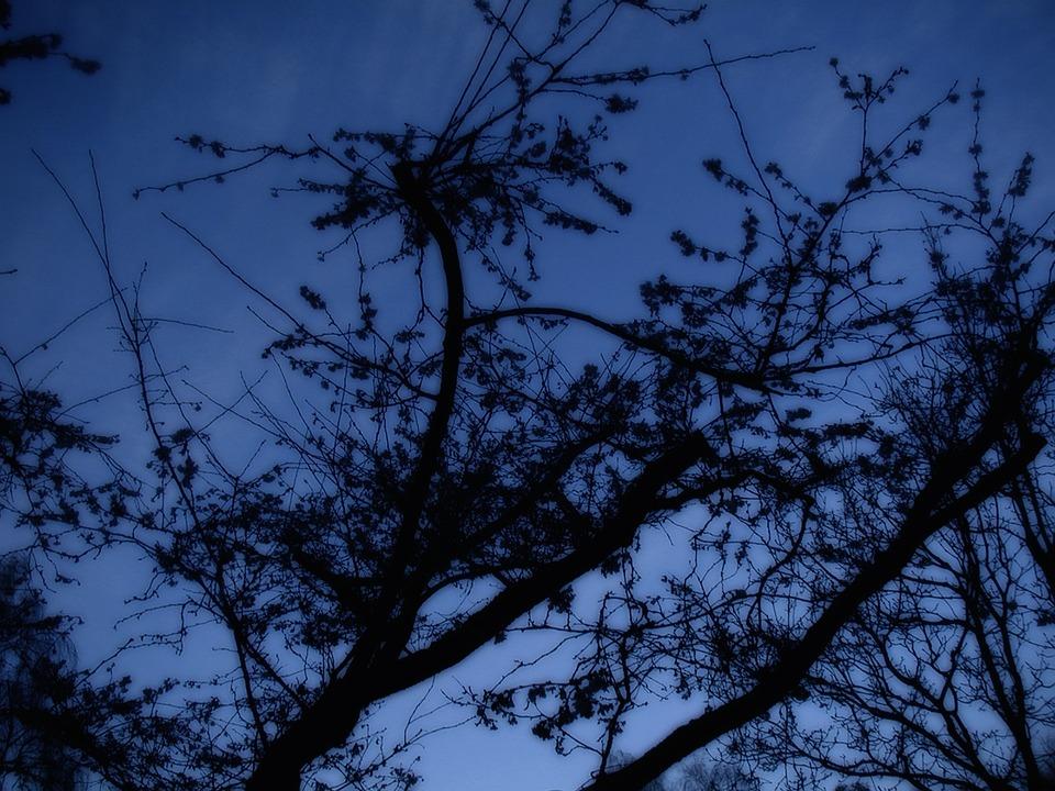 Tree, At Night, Silhouette