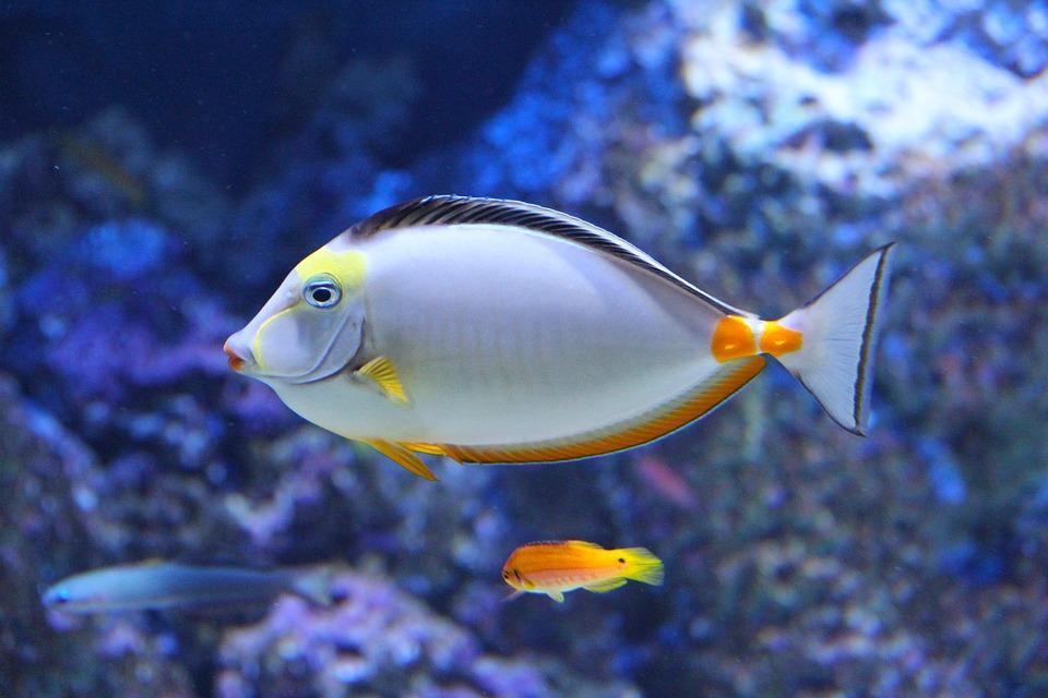 Beautiful, Aquarium, Beautiful Fish, Fish, Colorful