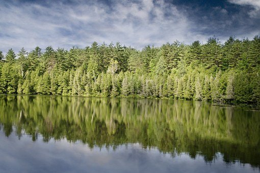 Shore, Lake, Forest, Bank, Fir Trees