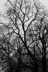 tree, ecology