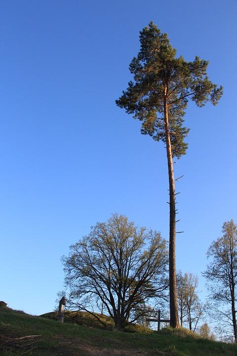 Pine Tree Christmas Tree