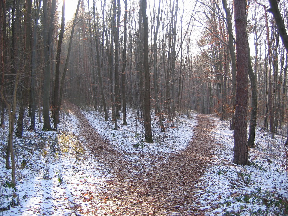 Forest Path, Winter, Crossroads
