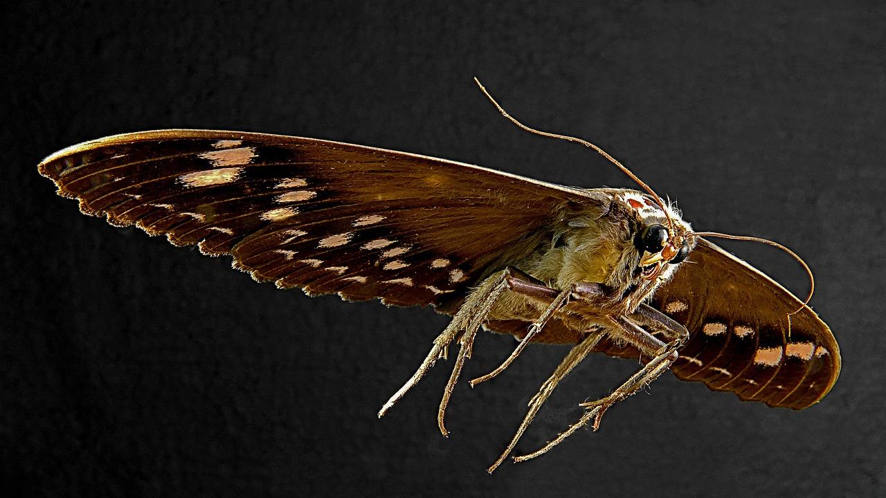 moth-238937_1280.jpg