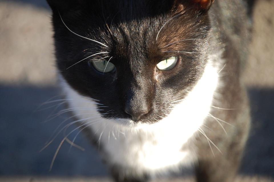 [Image: cat-239814_960_720.jpg]