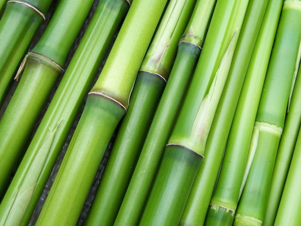 Dikke bamboe