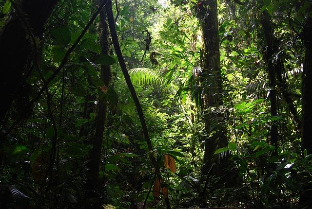 Free Photo Jungle Ecuador Nature Green Free Image On