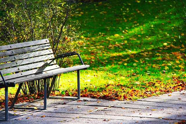 Free Photo Wood Bench Bench Rest Autumn Free Image