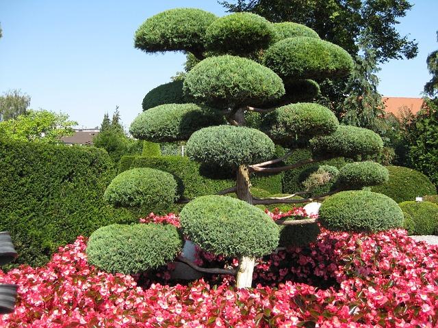 photo gratuite jardin japonais vert arbre image gratuite sur pixabay 241159. Black Bedroom Furniture Sets. Home Design Ideas