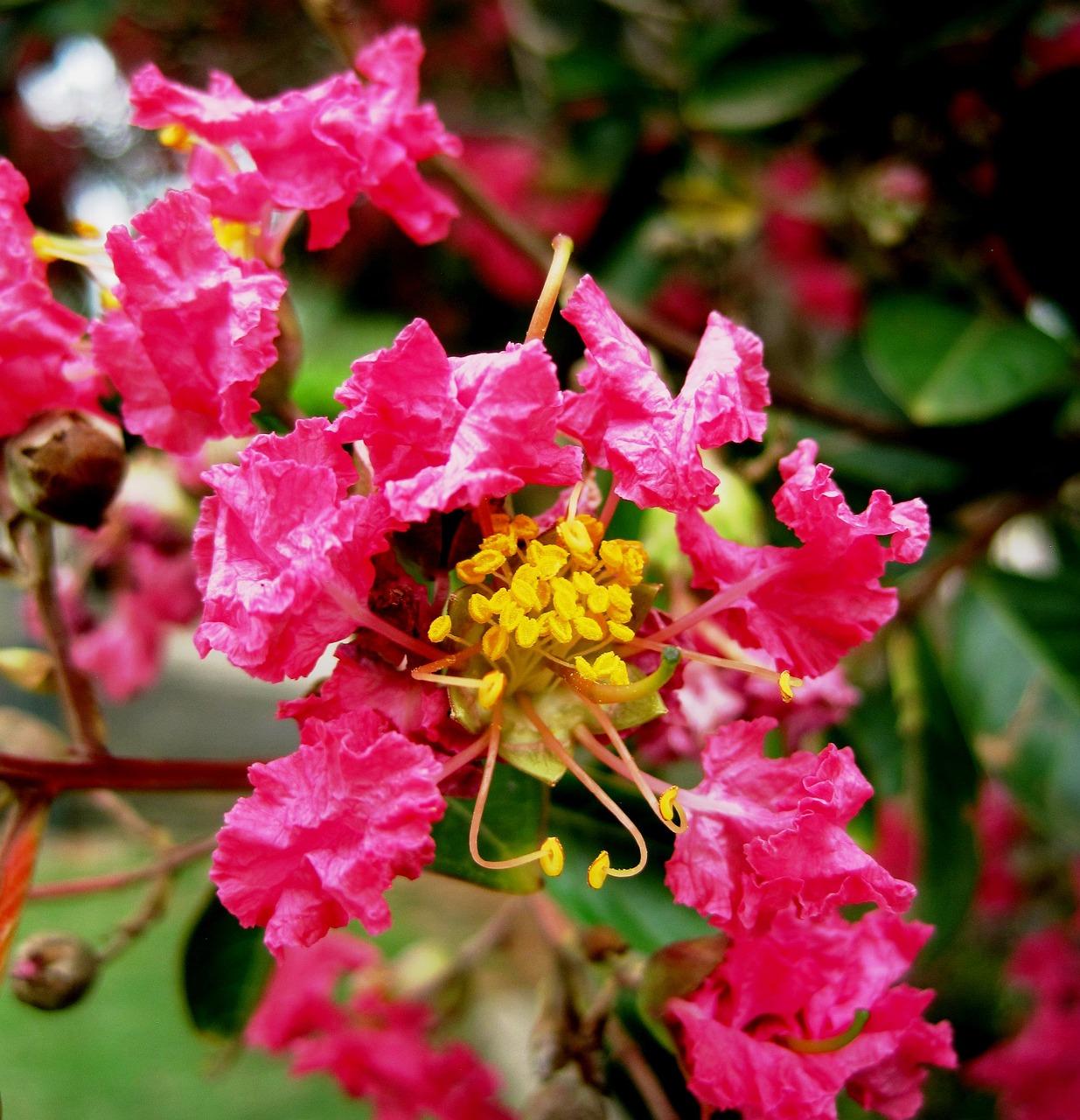Цветы индии в картинках