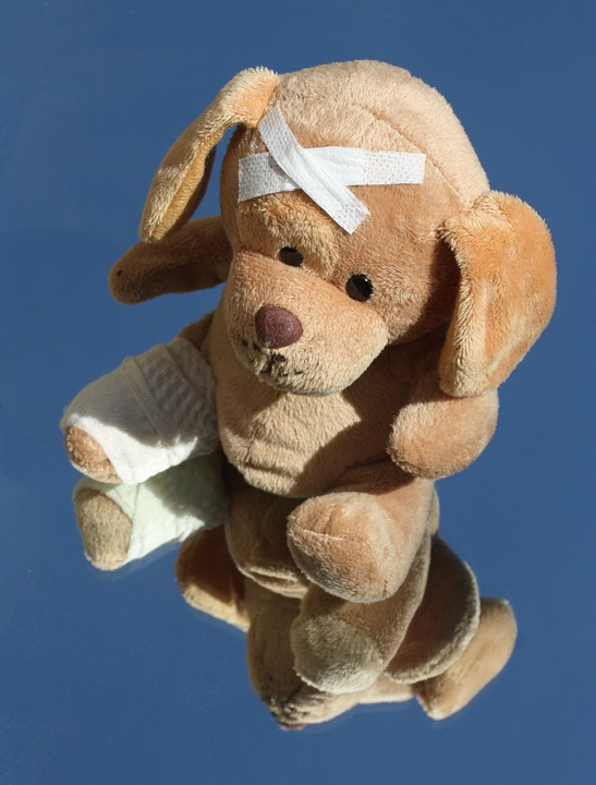 Free Photo Teddy Dog Broken Leg Free Image On