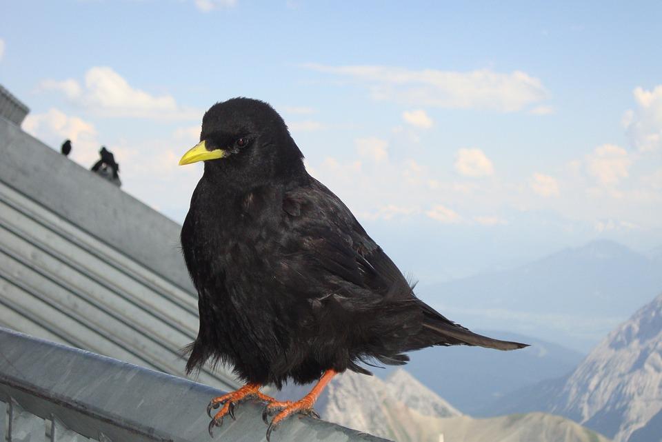 Zadarmo čierne vtáky