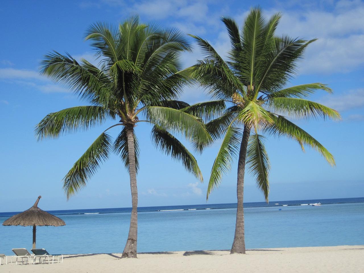 картинки пальмы на побережье старые