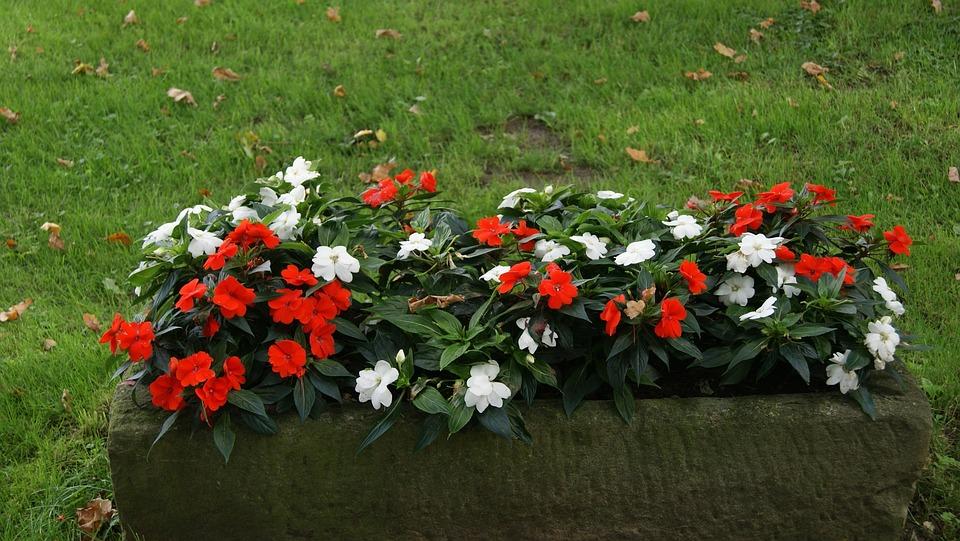 Jardiniere Lit De Fleurs Bloom Photo Gratuite Sur Pixabay