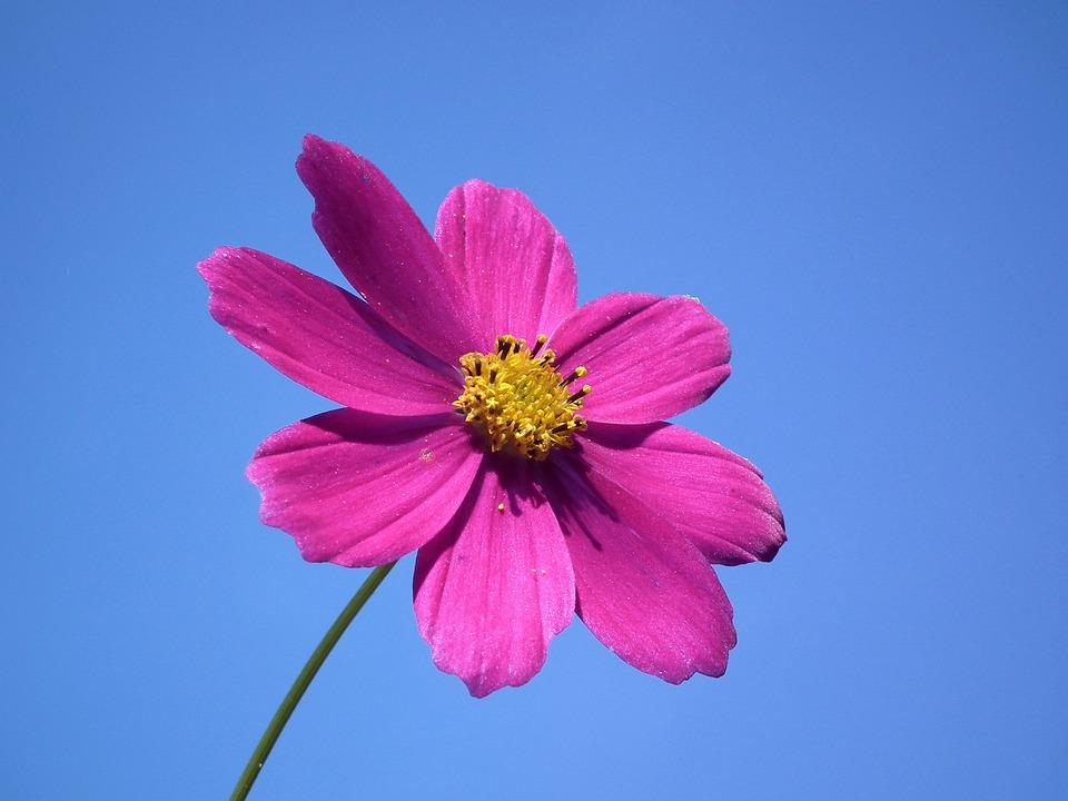 Free photo: Flower, Sk...