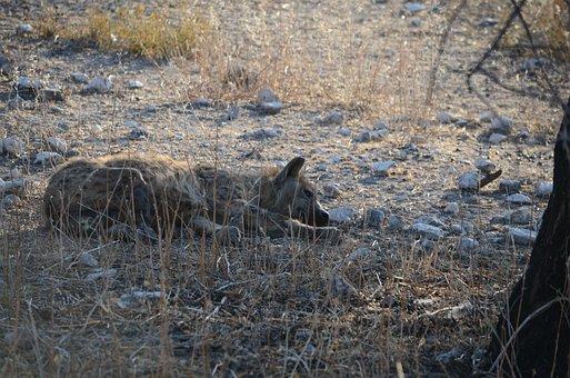 Plan Cul Cougar Annecy Le Vieux 74940 Avec Mature Et Cougar