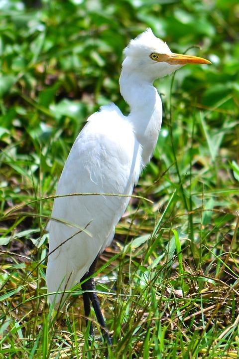 Crane Bird White - Free photo on Pixabay
