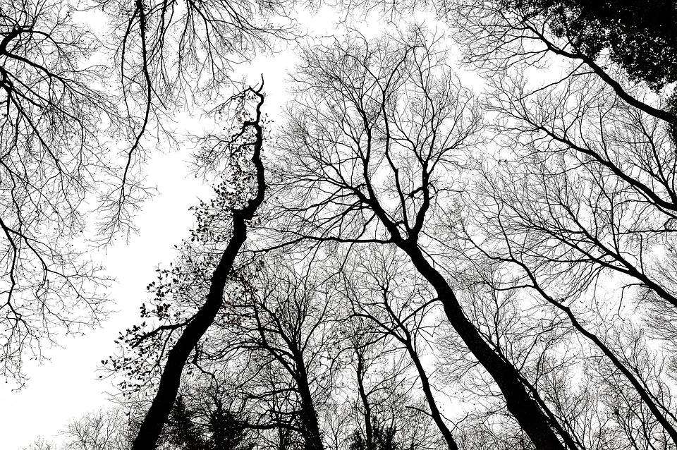 Árboles Ramas Bosque · Foto gratis en Pixabay
