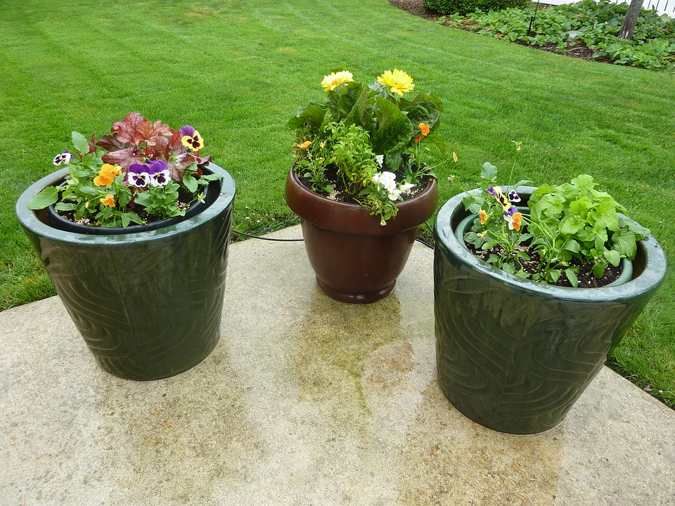 Free photo flowers pots patio potted free image on for Planting flowers in pots ideas