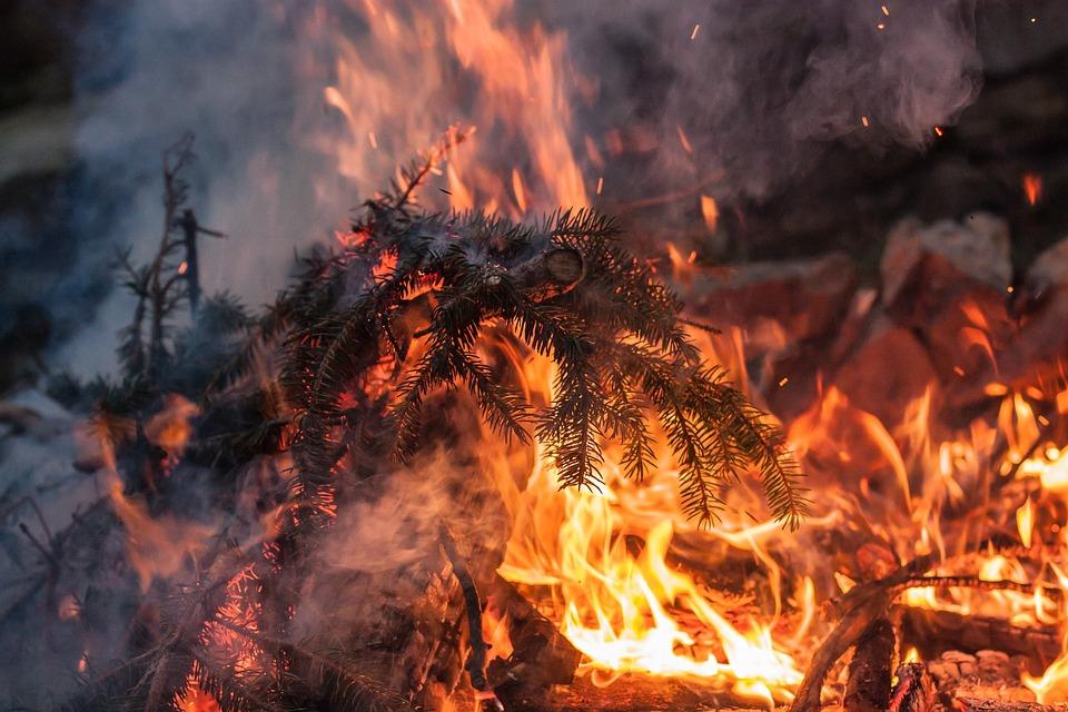 インフェルノ, Fir 小枝, 火, 泊, グロー, オレンジ, 熱, 燃焼, ホット, 屋外, 光, 暖かい