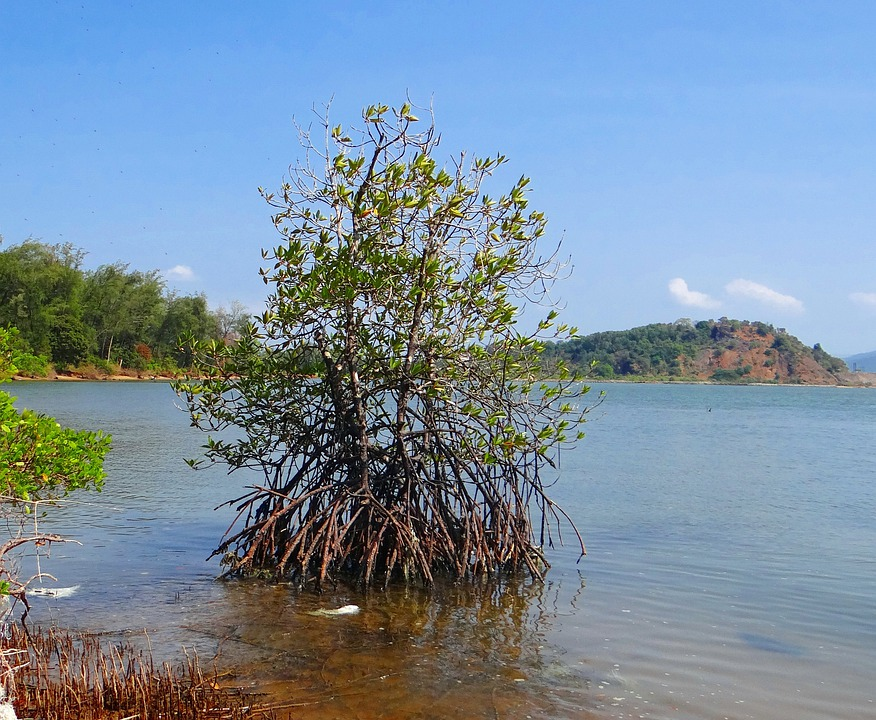 free photo mangroves  tidal forest  creek free image on snow vector freepik snow vector freepik