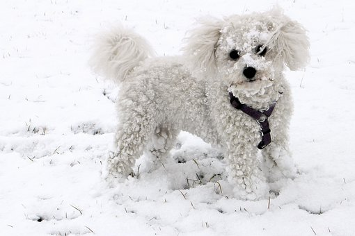 Animal, Dog, Snow, Winter, White