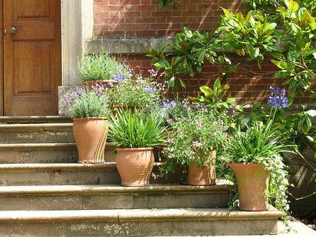 Plants, Pots, Terracotta, Plant Pot
