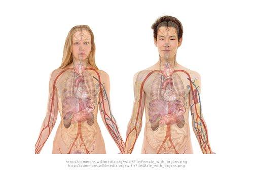 Mulher, Humano, Par, Homem, Face, Corpo