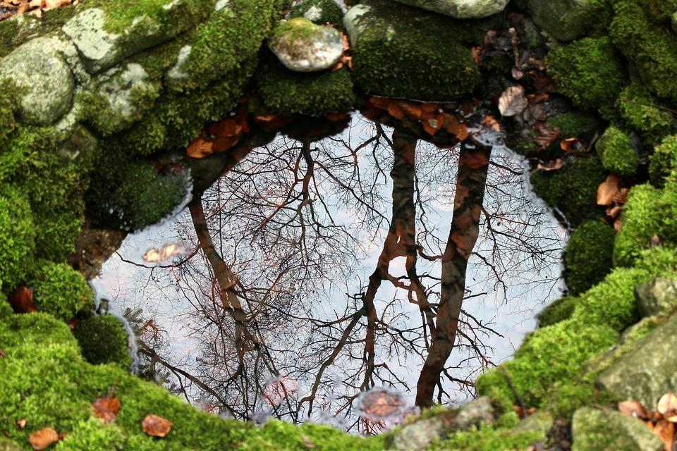 Natura, Fonte, Fontana, Acqua, Mirroring, Alberi