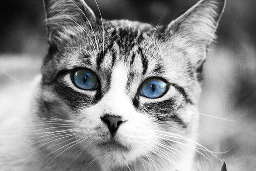 Cat, Animals, Pet, Cat Face, Cat Nose