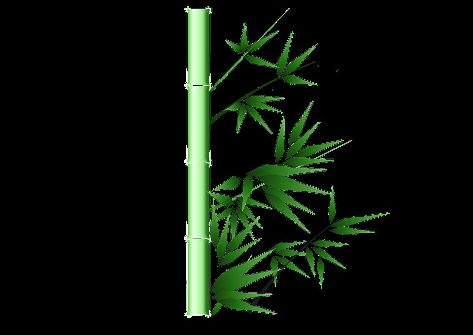 Hd wallpaper education - Free Illustration Bamboo Green Ink China Painting