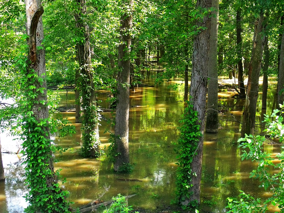 Free Photo Flooded Forest Flood Trees Green Free