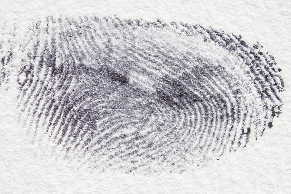 Fingeravtrykk, Daktylogramm, Papillær, Fingertupp