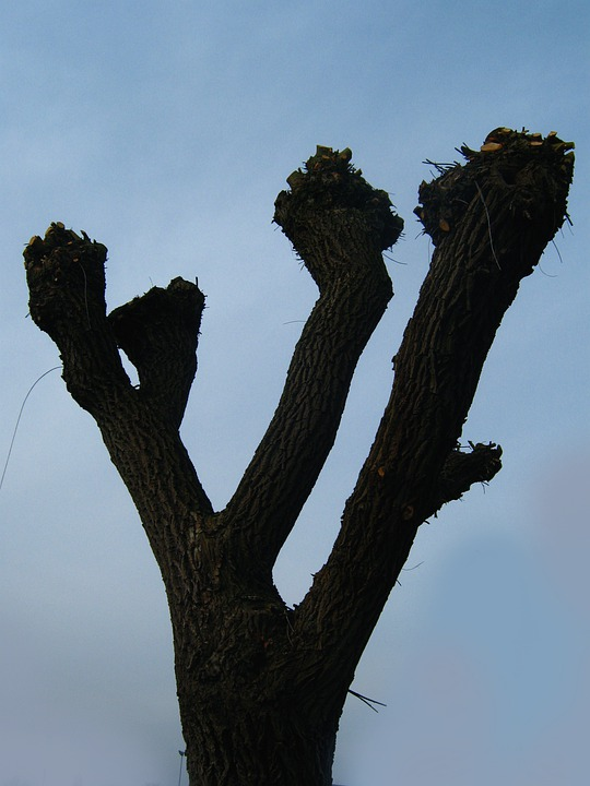 Baum Geschnitten Beschnitten Kostenloses Foto Auf Pixabay