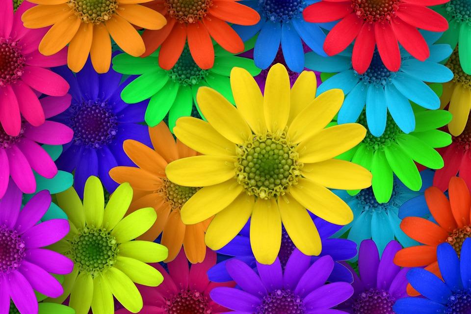Fleur Macro Jardin · Photo gratuite sur Pixabay
