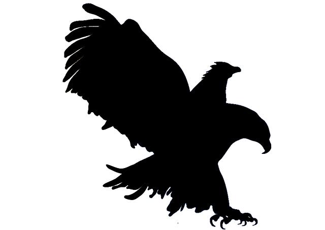 Eagle Attack Hunt · Free image on Pixabay