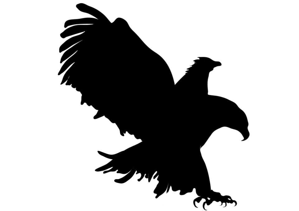 Black Vulture Painting