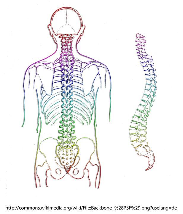 Wirbelsäule Skelett Wirbel · Kostenloses Bild auf Pixabay
