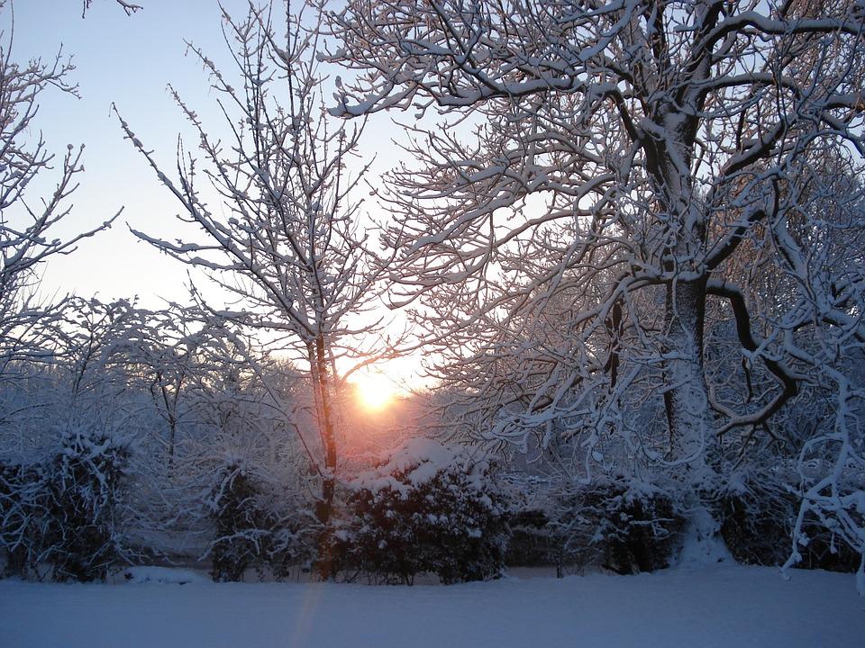 Zonlicht Door Bomen, Ondergesneeuwd Binnentuintje