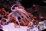 octopus, kraken, ocean