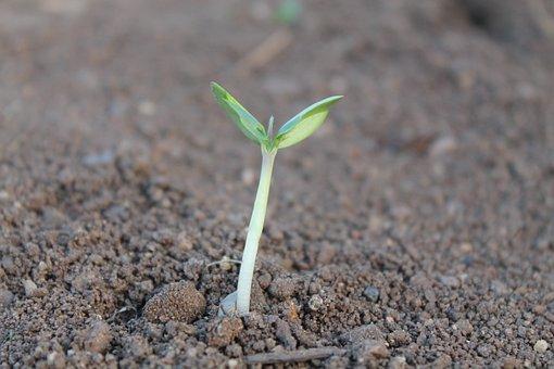 一本だけ芽がでている植物