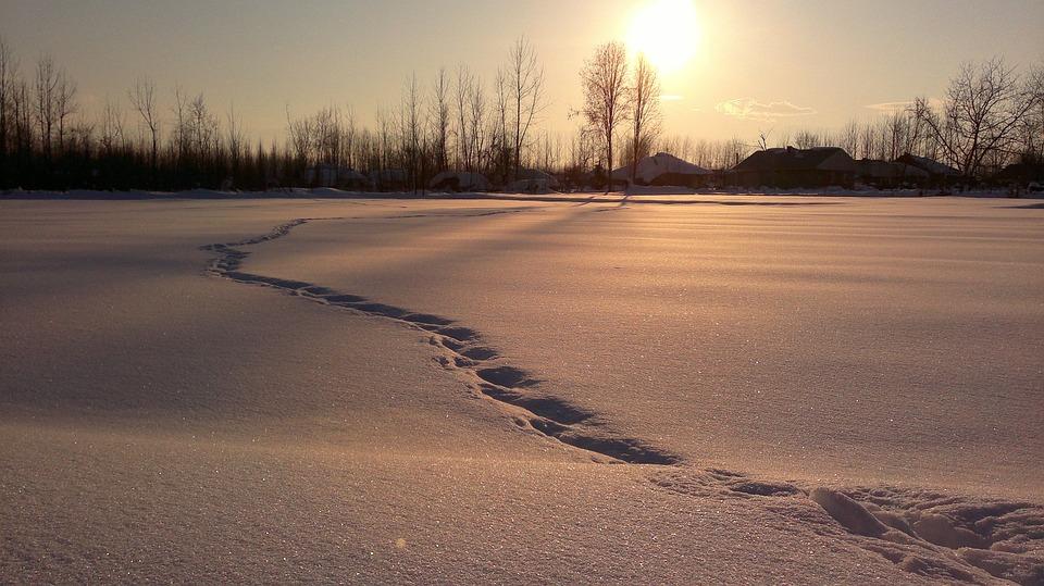 Schnee, Winter, Titel, Natur, Kälte, Schneefall