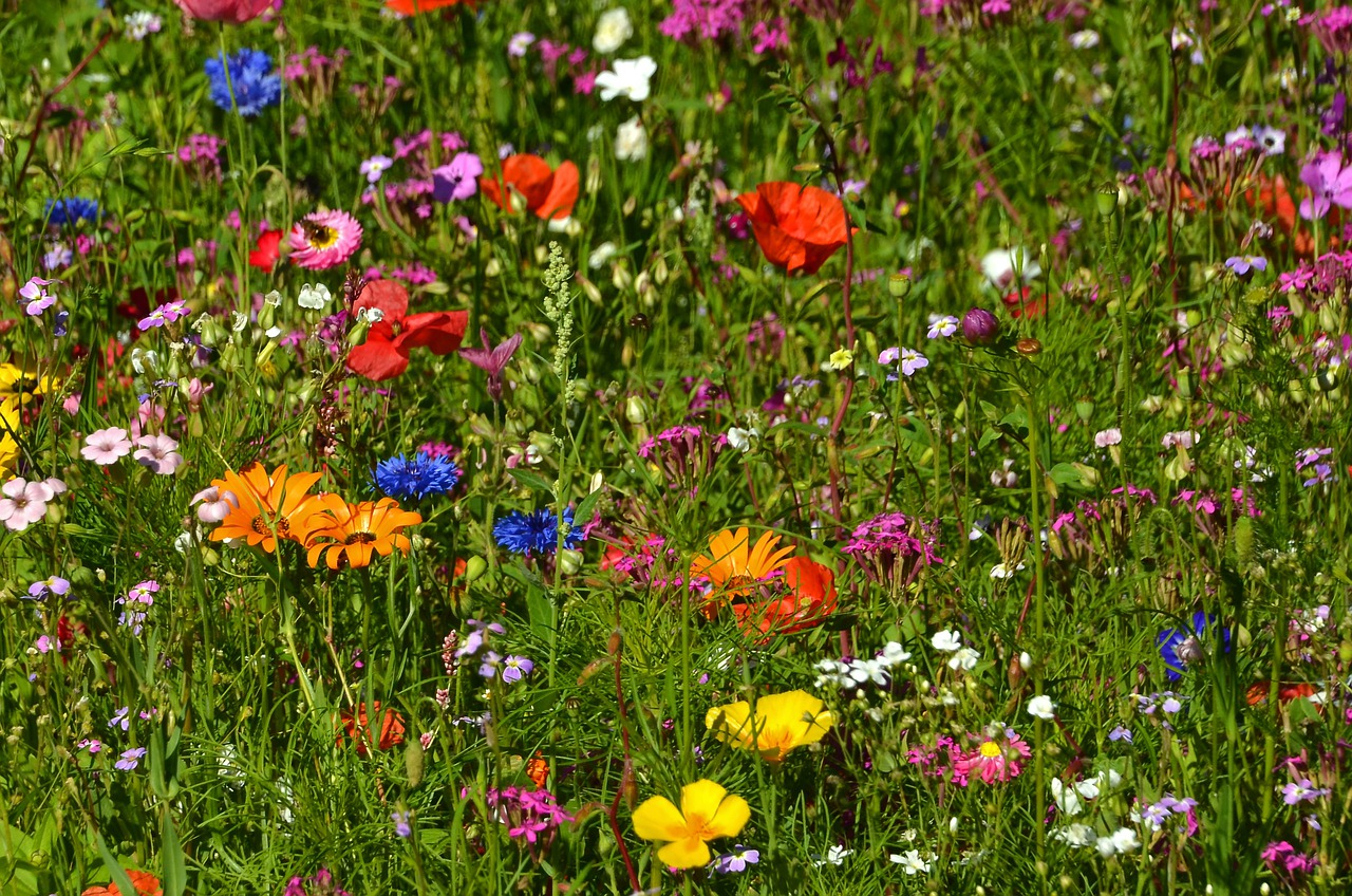 это красивейшие картинки много цветов на лугу ползучая представляет собой