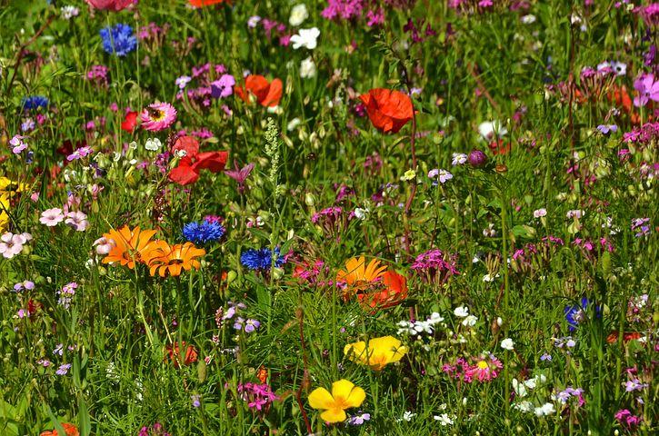 Цветы на лугу своими руками