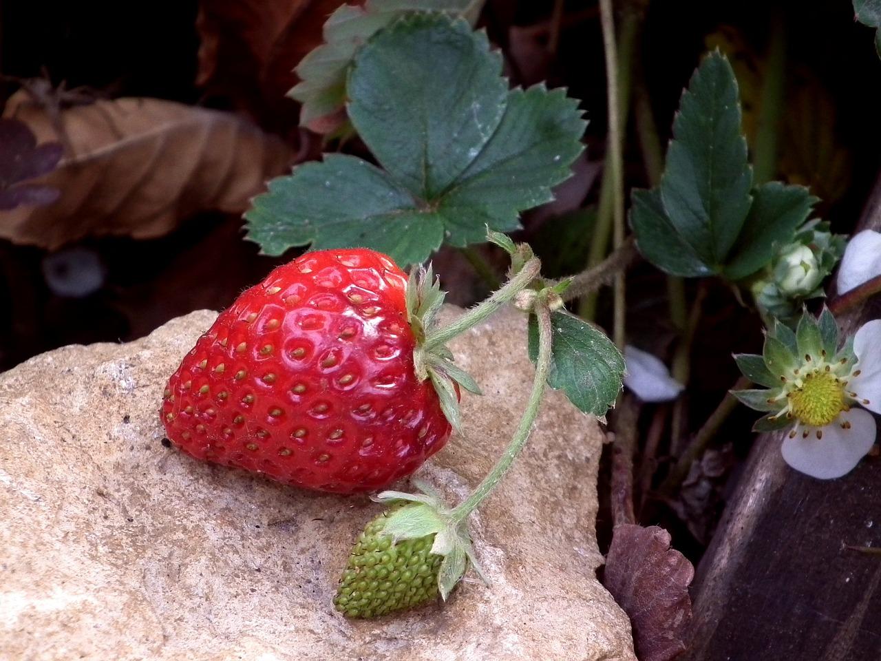 Удивительные растения мира фото и названия позволяют создать