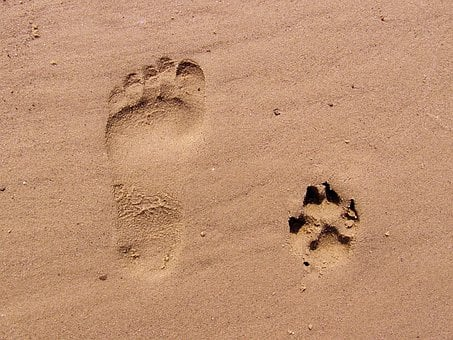 picture regarding Footprints in the Sand Printable titled 1,000+ No cost Footprint Footprints Visuals - Pixabay