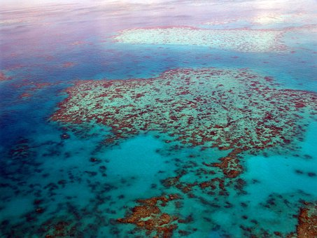 Great Barrier Reef, Diving, Coral, Ocean
