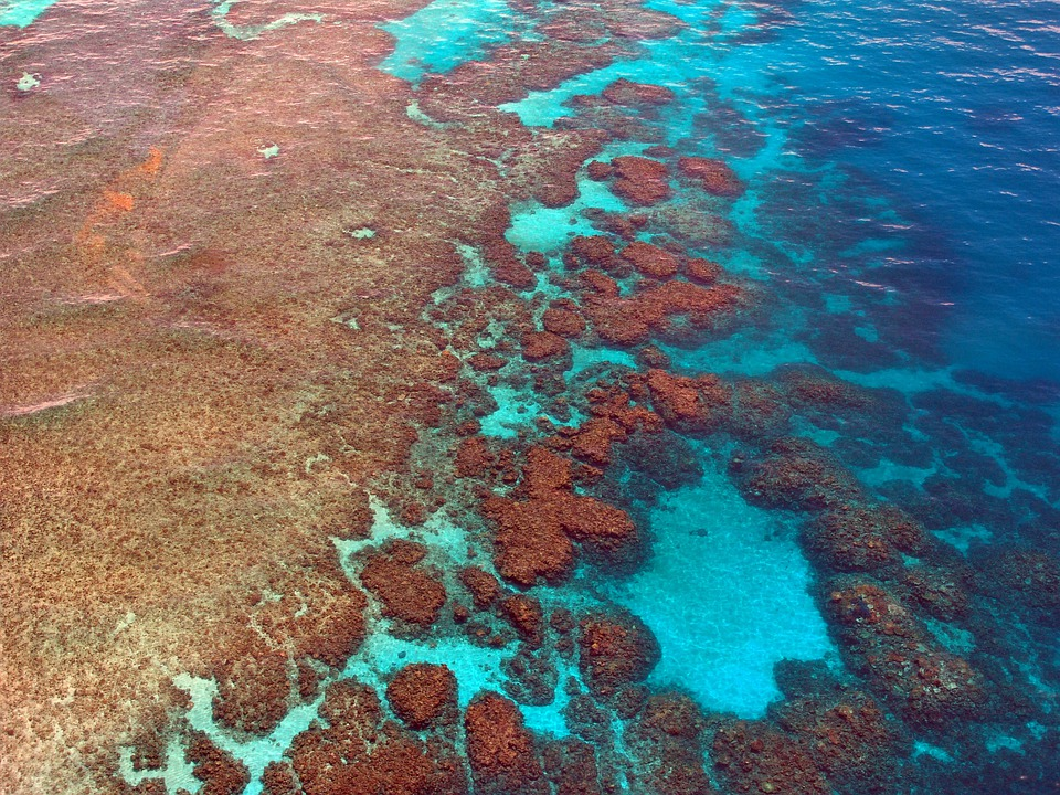 Большой Барьерный Риф, Дайвинг, Коралл, Океана