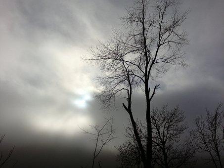 Árboles, Bosques, Nublado, Días, Nubes