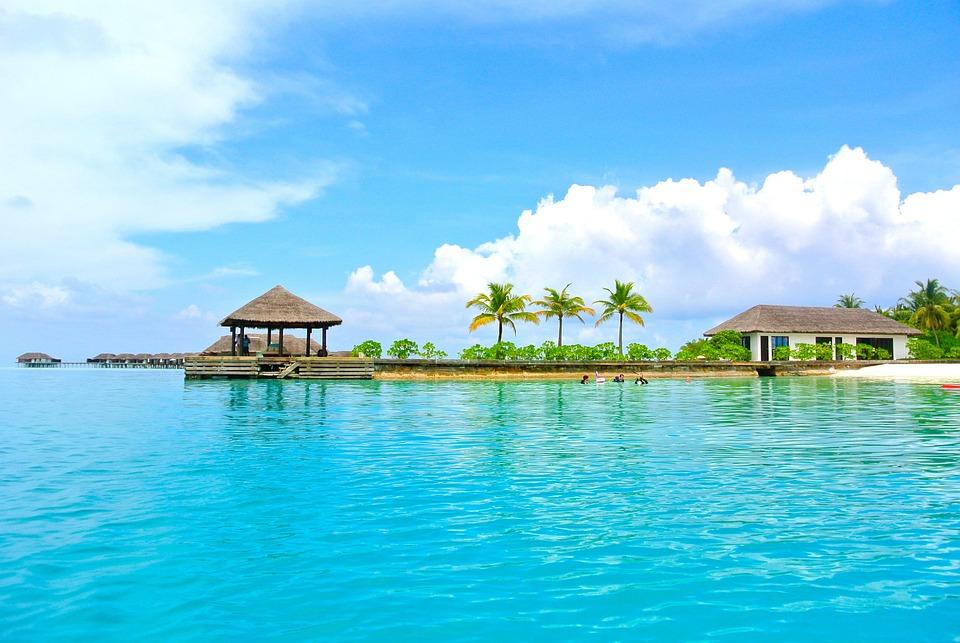 Maldive, Albero Di Cocco, Mare, Località, Estate