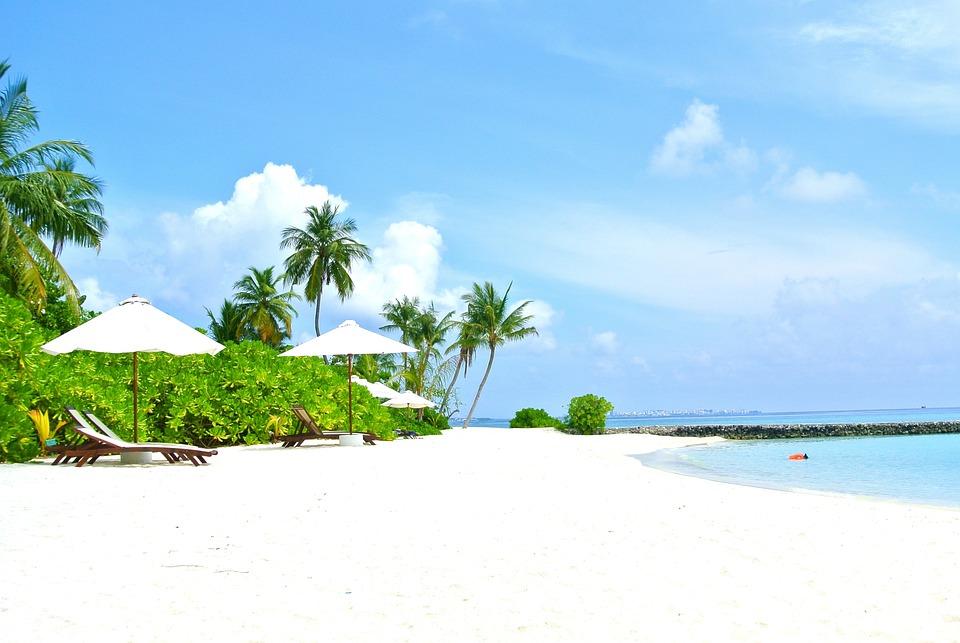free photo  maldives  coconut tree  sea  resort - free image on pixabay